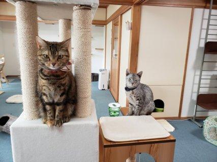 【お店紹介】猫cafeにゃんそーれ